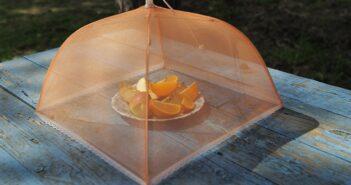 Fruchtfliegen loswerden: Tipps & Tricks!