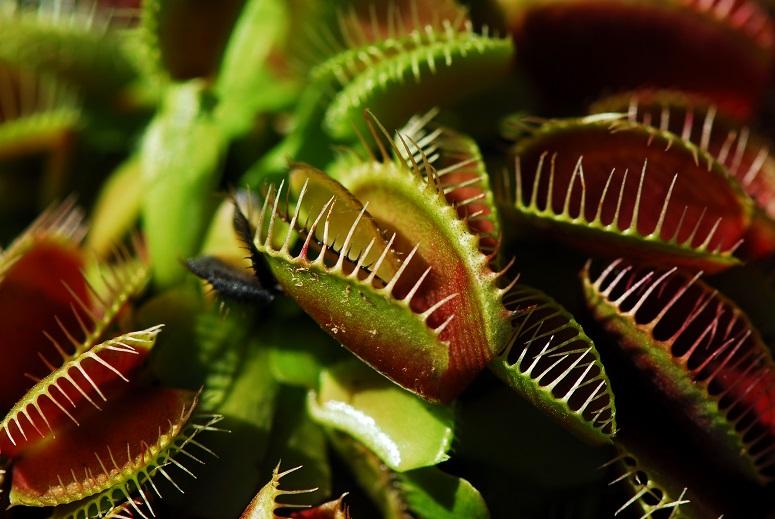 Fruchtfliegen Loswerden 8 Tipps Um Obstfliegen Zu Bek Mpfen