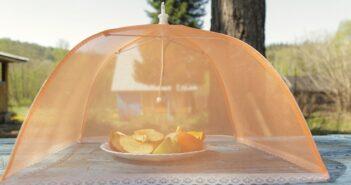 Fruchtfliegen loswerden: Tipps & Tricks