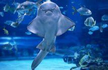 Abtauchen in die schönsten Aquarien-Welten