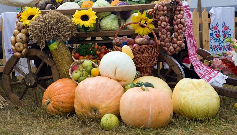 Regionale Anbieter von Gemüse und Obst haben gleich mehrere Vorteile: frische Produkte aus einheimischem Anbau, kurze Transportwege innerhalb einer Region, attraktive Preise während der Saison und nicht selten ein Bio Siegel für den biologischen Anbau. (#03)