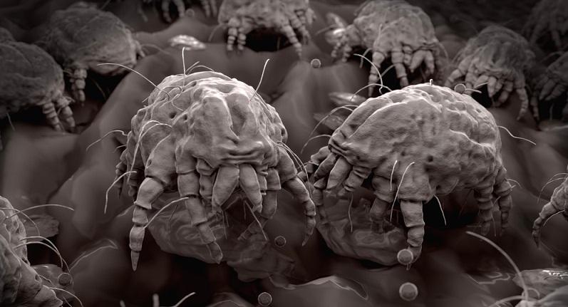 Essig wird gerne zur Bekämpfung der Läuse empfohlen, kann aber auch sehr gut bei Milben helfen.