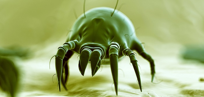 Mittel gegen Milben: Schnelle Hilfe gegen die Plagegeister