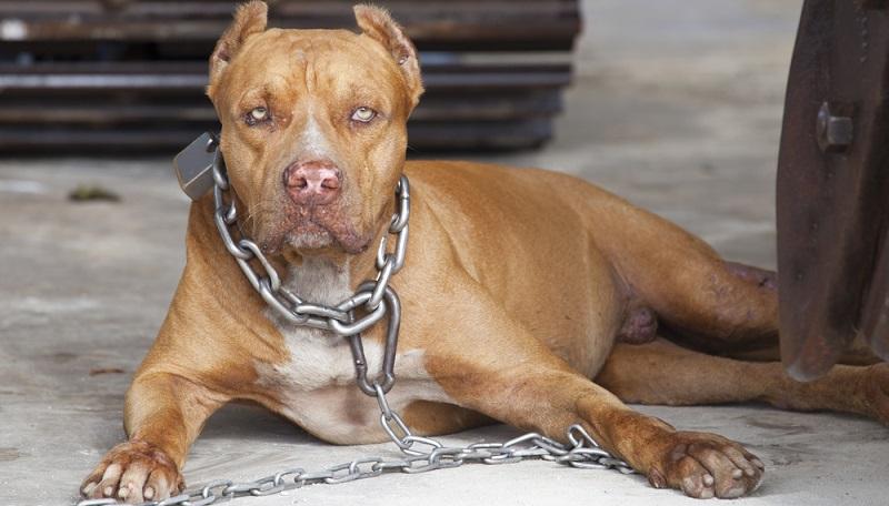 Um die allgemeine Gefährdung durch sogenannte gefährliche Hunde in Hamburg zu reduzieren, wurden die Hundesteuersätze für bestimmte Rassen drastisch nach oben gesetzt.