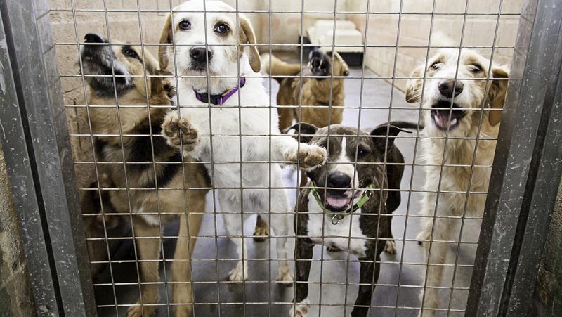 Jedem vernünftigen Hundebesitzer ist der Tierschutz ein generelles Anliegen. Leider gibt es auch immer wieder Menschen, die mit ihren Tieren überfordert sind oder sie fahrlässig (manchmal sogar vorsätzlich) schlecht behandeln.