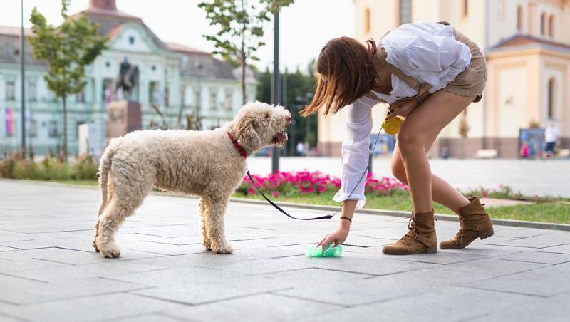 Als besonderen Service bietet die Stadtreinigung Hamburg den Hundehaltern eine kostenlose Versorgung mit Gassibeuteln an, die entweder gegen Rückporto und Rückumschlag per Post angefordert oder in Filialen bestimmter Drogeriemärkte abgeholt werden können.