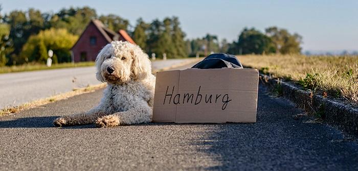 So hält man Hunde in Hamburg: Wissenswertes rund um hanseatische Vierbeiner